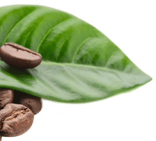Leaf with Coffee Beans